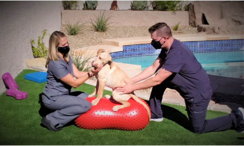 dog physical therapy at home