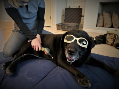 pet physical therapy at home